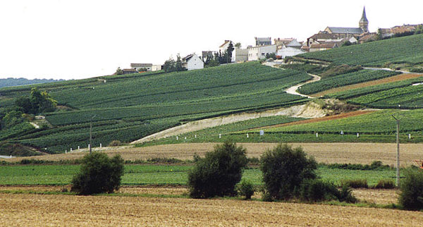 Champagne village and vineyards